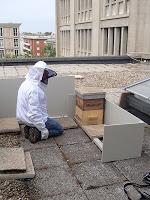 ruche dans la ville